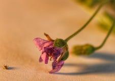 Älskvärd liten blomma Arkivbilder