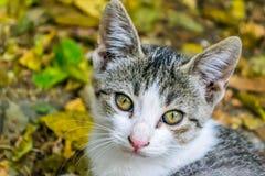 Älskvärd liten katt fotografering för bildbyråer