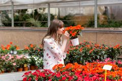 Älskvärd lycklig trädgårdsmästare för ung kvinna som väljer blomkrukan med anthuriums i trädgårds- mitt royaltyfri bild
