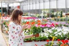 Älskvärd lycklig trädgårdsmästare för ung kvinna som väljer blomkrukan med anthuriums i trädgårds- mitt arkivfoto