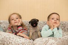 Älskvärd mopsvalp och gulliga ungar, klockaTV Arkivbild