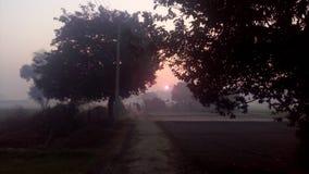 älskvärd morgon Royaltyfri Fotografi