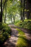 älskvärd morgonbana för tidig skog Arkivfoton
