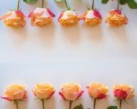 Älskvärd ny kräm- ram för rosblommaform Fotografering för Bildbyråer