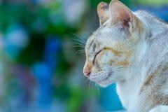 Älskvärd sömnig katt Arkivbilder