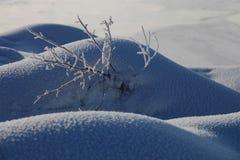 Älskvärd snöpacke Arkivfoton