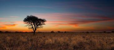 Älskvärd solnedgång i Kalahari med det döda trädet Arkivfoto