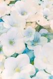Älskvärd stil för färgrik pappers- bakgrundsmodell för blommor Arkivfoton