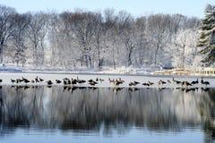 älskvärd vinter Royaltyfria Bilder