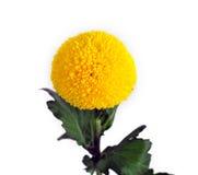 älskvärd yellow för blomma Royaltyfria Foton