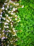 älskvärda blommablad&grass Arkivfoto