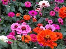 Älskvärda blommor royaltyfri fotografi