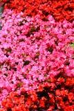 Älskvärda blommor Royaltyfria Foton