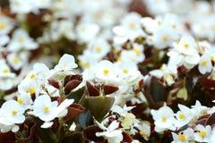 Älskvärda blommor Arkivbilder