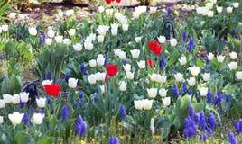 Älskvärda blommor Royaltyfria Bilder