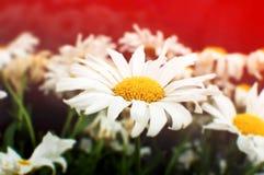 Älskvärda blommor Royaltyfri Bild