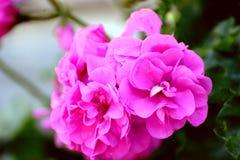 Älskvärda blommor Arkivbild