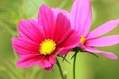 Älskvärda blommor Fotografering för Bildbyråer