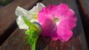 Älskvärda blommor arkivfoton