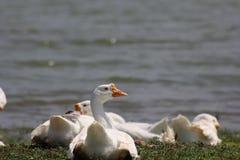 älskvärda fåglar Royaltyfria Bilder