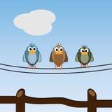 Älskvärda fåglar som utomhus kopplar av Royaltyfri Fotografi