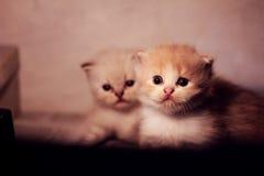 Älskvärda husdjur Royaltyfri Foto