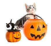 Älskvärda kattungelekar med halloween leksaker Arkivbilder