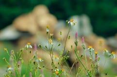 Älskvärda lösa blommor med oskarpa stenar i bakgrunden Arkivfoto
