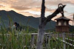 Älskvärda par under solnedgång Fotografering för Bildbyråer