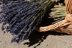 älskvärda petals för lavendel Royaltyfria Foton