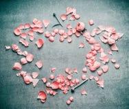 Älskvärda rosa pastellfärgade kronblad av blommor på lantlig bakgrund för turkos, lekmanna- lägenhet, bästa sikt, ram Arkivbild