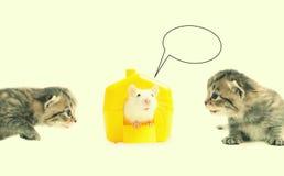Älskvärda skämtsamma kattungar Fotografering för Bildbyråer