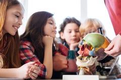 Älskvärda uppmärksamma studenter som lyssnar till en föreläsare Royaltyfria Bilder