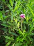 älskvärt blommablad Arkivfoto