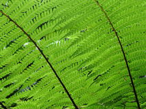 Älskvärt grönt blad i skogen Royaltyfri Fotografi