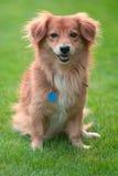 älskvärt husdjur Royaltyfri Fotografi