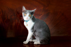 älskvärt mitt för katt Arkivfoton