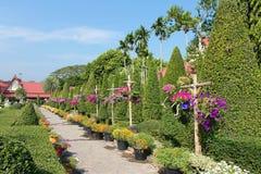 Älskvärt stag, blommaträdgård, Thailand Arkivbild