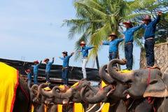 Älskvärt stag, elefantshow, Thailand Royaltyfri Fotografi