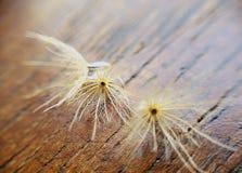 Älskvärt torrt gräs Royaltyfri Foto