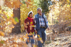 Ältere Afroamerikaner-Paare, die durch Fall-Waldland gehen lizenzfreies stockfoto