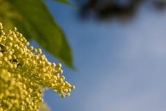 Ältere Blume Stockfotografie