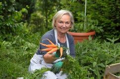Ältere Dame am Garten, der Karotten hält Stockfotografie