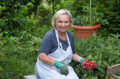 Ältere Dame am Garten, der Rettiche hält Stockbilder