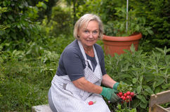 Ältere Dame am Garten, der Rettiche hält Stockfoto