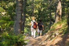 Ältere, die im Holz trekking sind lizenzfreies stockbild
