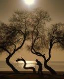 Ältere Frau der Leute und der Bäume, die auf einen Stock geht Lizenzfreie Stockbilder