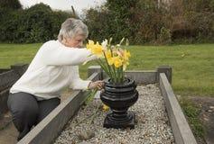 Ältere Frau, die Blumen auf ein Grab setzt Lizenzfreie Stockfotos