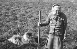 Ältere Frau, die das Feld bearbeitet Stockfotografie