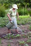 Ältere Frau, die im Garten arbeitet Stockfotografie